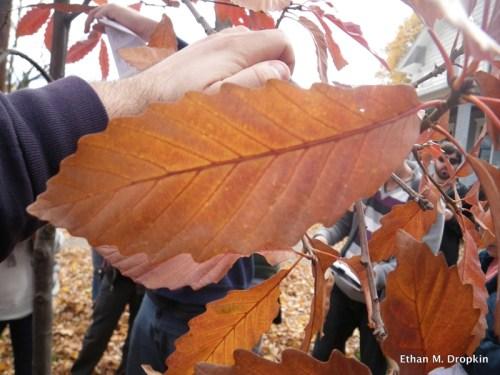 fall-color-ethan-m-dropkin