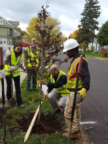 syracuse tree planting II