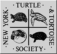 Activities of the New York Turtle and Tortoise Society