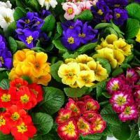 Tavaszi virágok, füzek