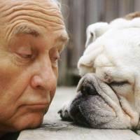 Milyen kutya a legalkalmasabb az időseknek