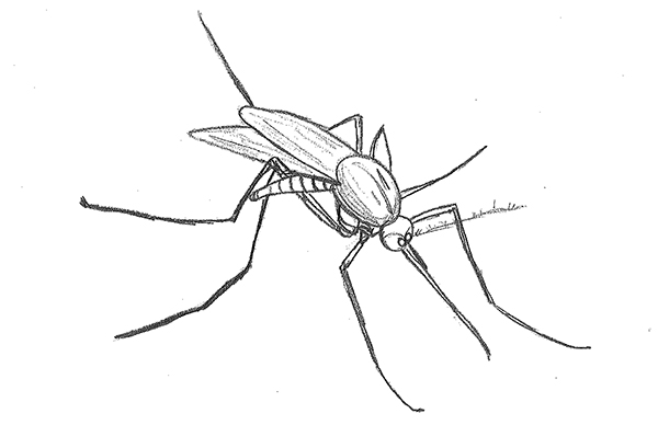 The Zika virus is transmitted to people through mosquito bites.