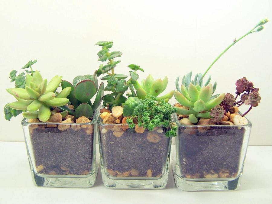 HUMOR: NYU Nursing Grad Raises Three Beautiful Succulents Instead of Real Kids