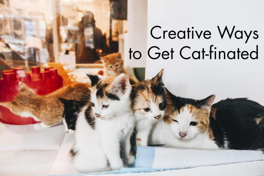 Creative+Ways+to+Get+Cat-finated