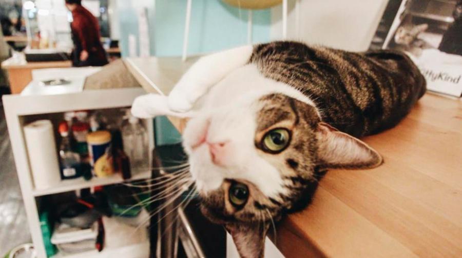 Exposure | The Cat Cafés of New York
