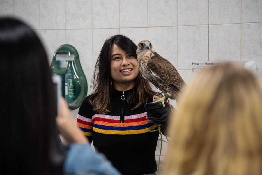 CAS junior Isay Acenas visits a falcon hospital in the United Arab Emirates in January. Isay has done research in the UAE, studied in Sydney and Buenos Aires and will study in Madrid next spring. (Staff Photo by Sam Klein)
