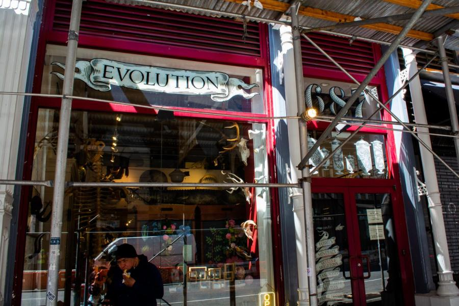 The Evolution Store, founded in 1993, is a museum-style shop located on 687 Broadway. This family-owned business carries science & natural history-related items. (Staff Photo by Manasa Gudavalli)