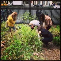Guests pick fresh produce at the NYU Urban Farm Lab's Harvest Celebration.