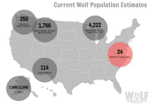 small resolution of feds seek to strip federal esa protection for gray wolves nationwide gray wolf adaptations diagram gray wolf diagram