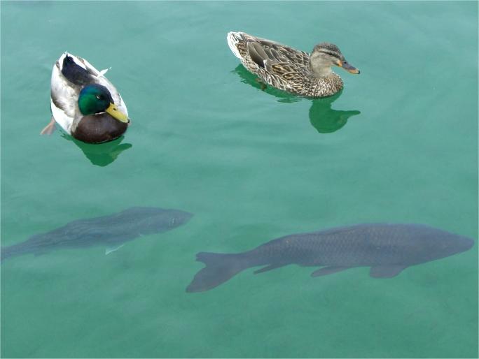 Lake Mead Marina