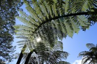 Looking up through the palm trees on our Cathedral Cove walk
