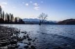 """""""That Wanaka Tree""""; the famous Wanaka willow tree in Lake Wanaka"""
