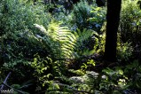 We loved the way the sunlight filtered through the forests. The forests in New Zealand seemed super dense--just packed full of greenery.