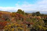 Looking back toward Whakapapa Village and the fiery landscape of Tongariro