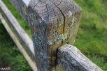 The mold/lichen on the fences was fake, made up of paint globbed together and clumped on the wood.