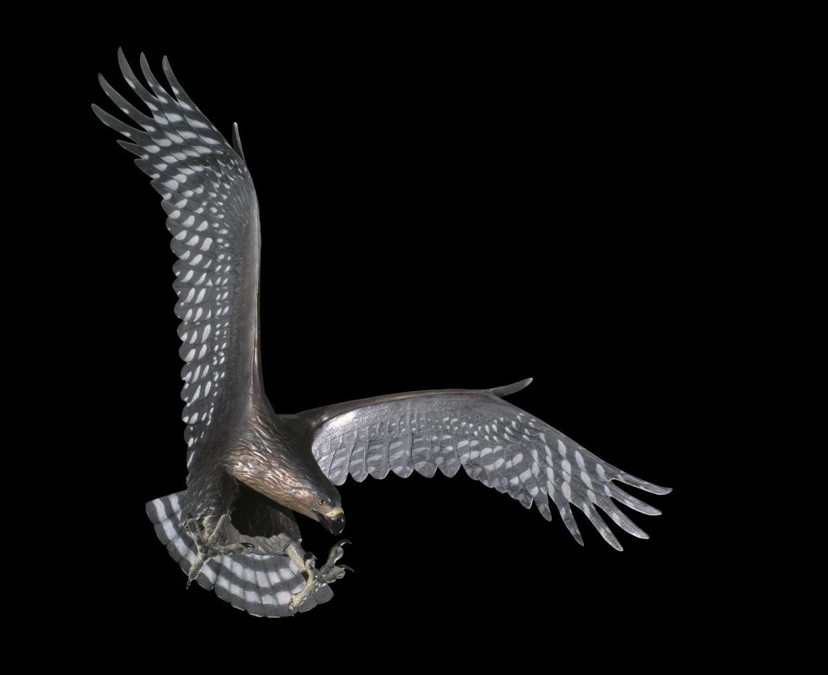 golden eagle skeleton diagram 400m track haast s new zealand birds online image copy model specimen registration no 035330