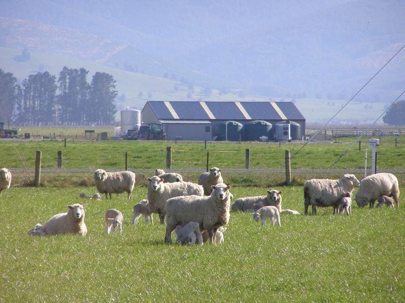 9月のNZ牧場風景