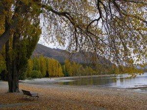14年4月17日のワナカ湖畔ポプラ並木の黄葉