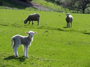 29th-sep-lamb-farm