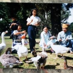 Kitchen Basket Small Sink 【叶宋曼瑛】纽西兰的岁月: 顾城夫妇生活点滴 | 新西兰毛传媒