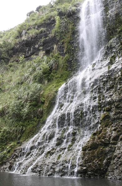 karekare waterfall in west auckland bush