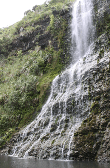 karekare waterfall in west auckland bush