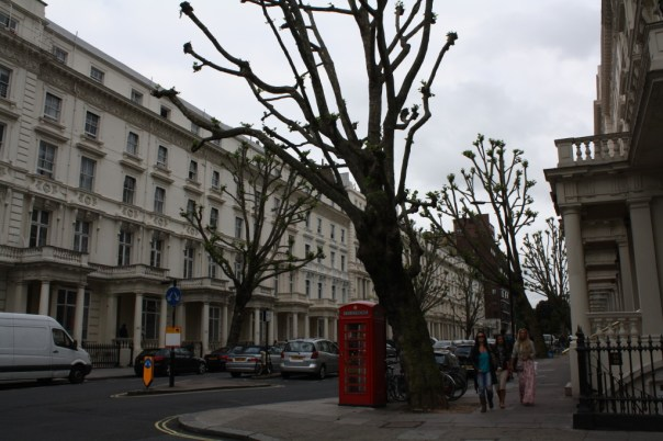 Giant bare trees and beautiful old buildings in Hyde Park / Kensington, London