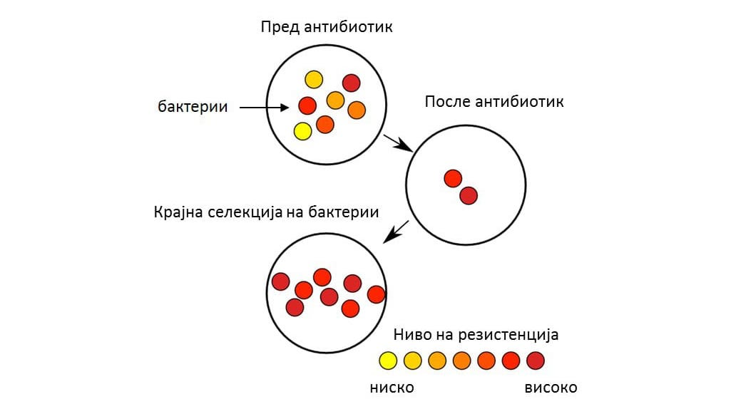 Слика 1