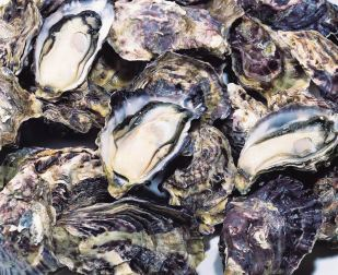 oyster-pic-5