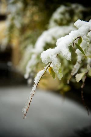 Snow_2012-06-06_09-49-05__DSC1186_©RichardLaing(2012)