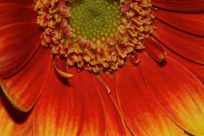 Flower_2010-09-14_22-32-37_DSC_0256_©RichardLaing(2010)