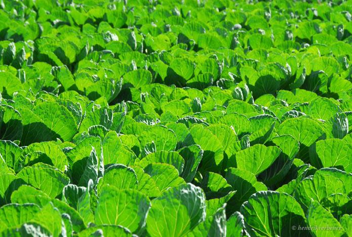 landbouw-001_spruiten_695_467_72