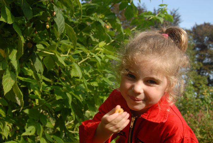 Elena plukt gele herfstframbozen