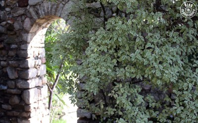 jardin saint-bernard hyères 10