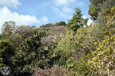 jardin saint-bernard hyères 18