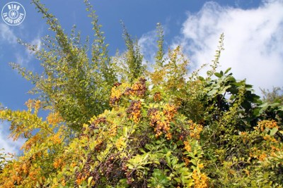 jardin saint-bernard hyères 20