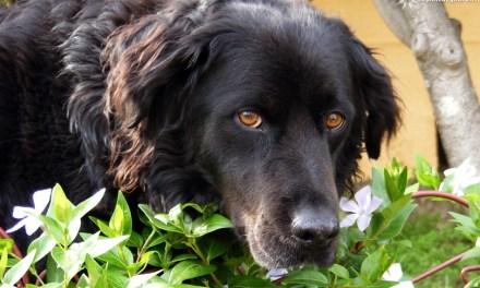 Où promener son chien autour de Toulon ?