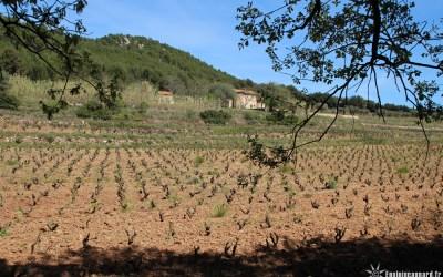 Le Sentier des Vignes | Saint-Cyr-sur-Mer