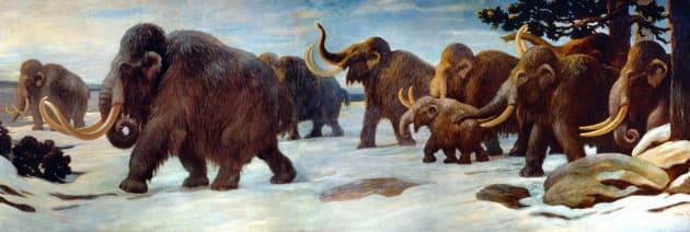 mammouths