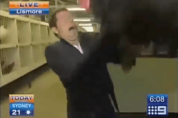 animals attacking reporters on TV, rooster chicken