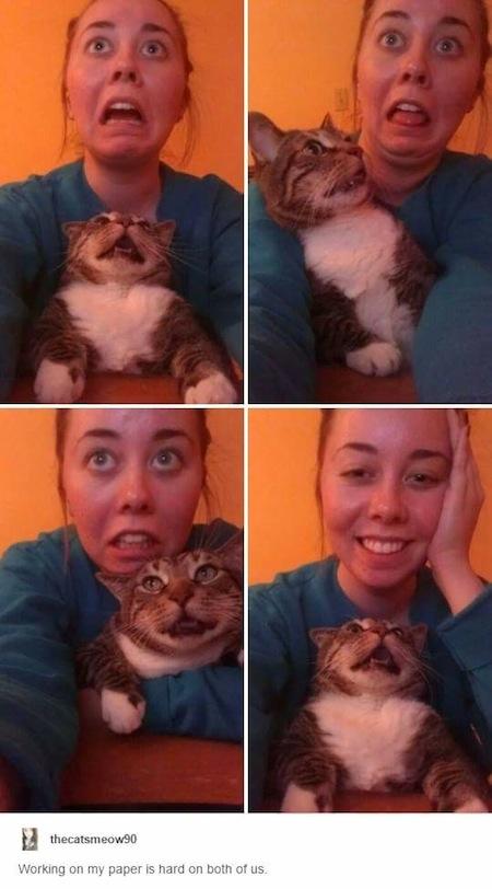weird cats, evil cats, weird faces cat
