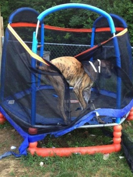 stuck pets, pets stuck pretending everything is cool, dog stuck trampoline