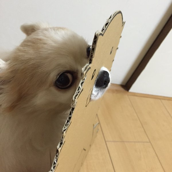 This Dog Reached For The Stars