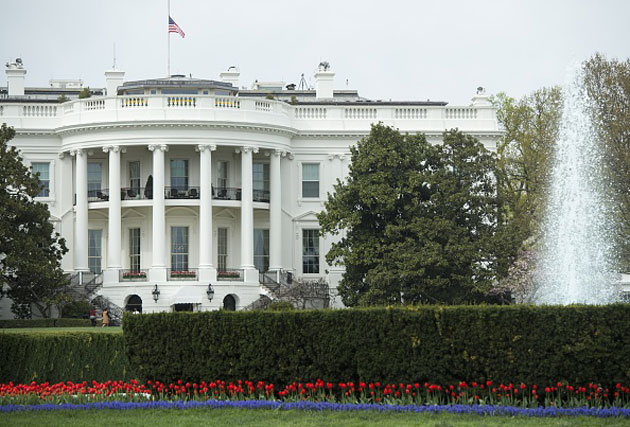 Tulips on the White House lawn