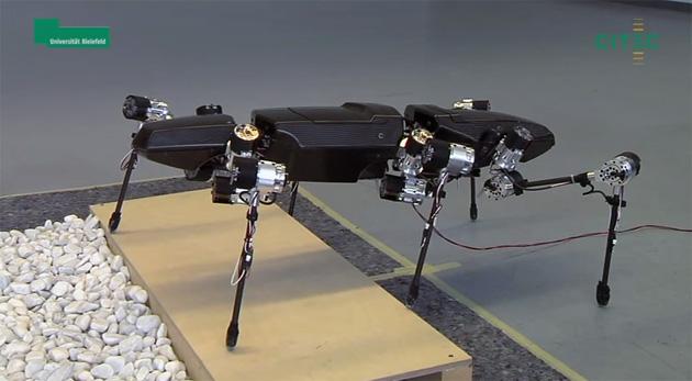 Guardi i primi punti di un robot ispirato dagli insetti del bastone