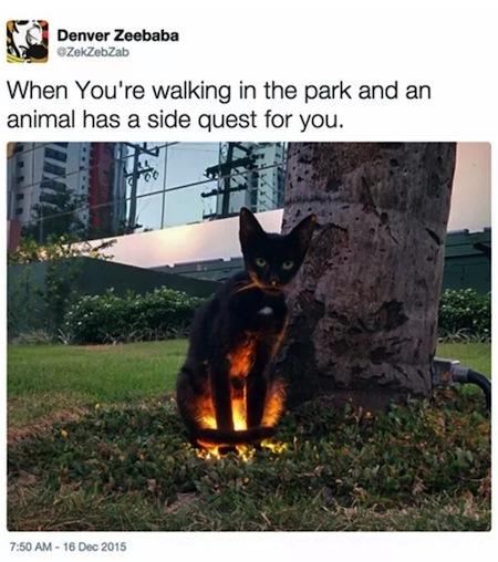 weird cats, evil cats, video game quest cat