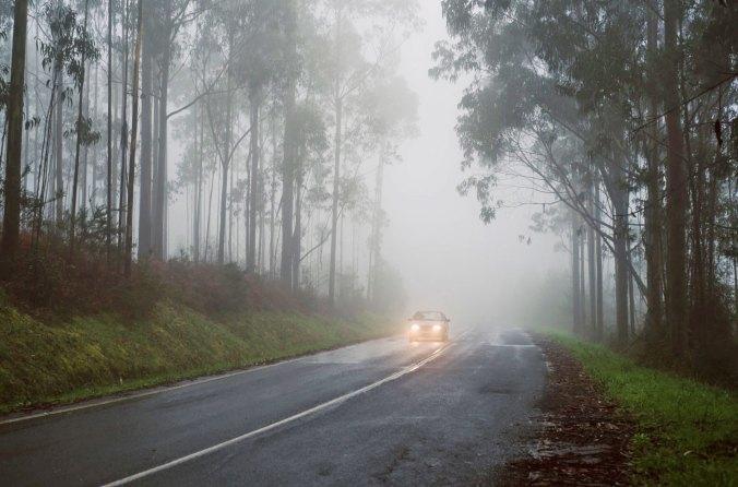 fog-ed.jpg