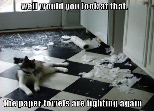 weird cats, evil cats, cat destroys paper towels