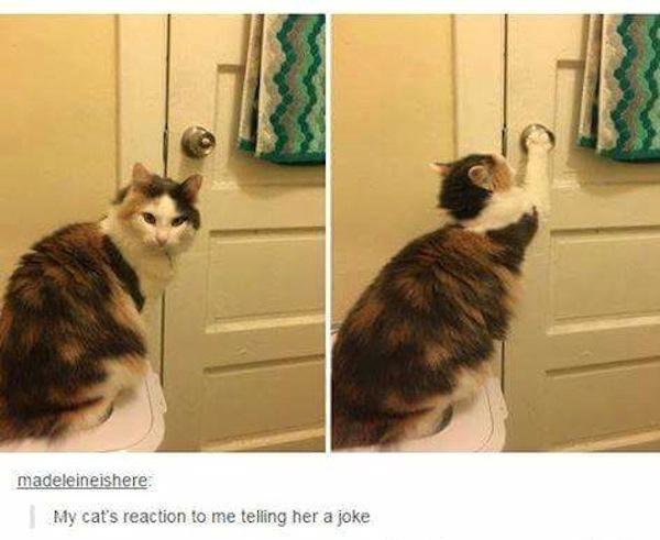 weird cats, evil cats, cat grabs doorknob