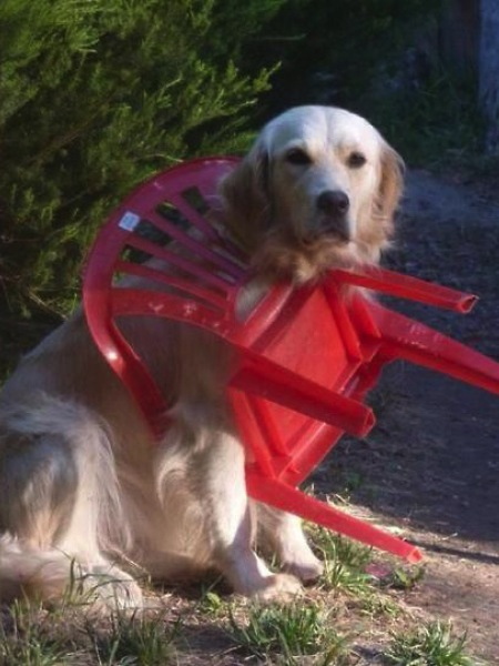 stuck pets, pets stuck pretending everything is cool, dog stuck chair